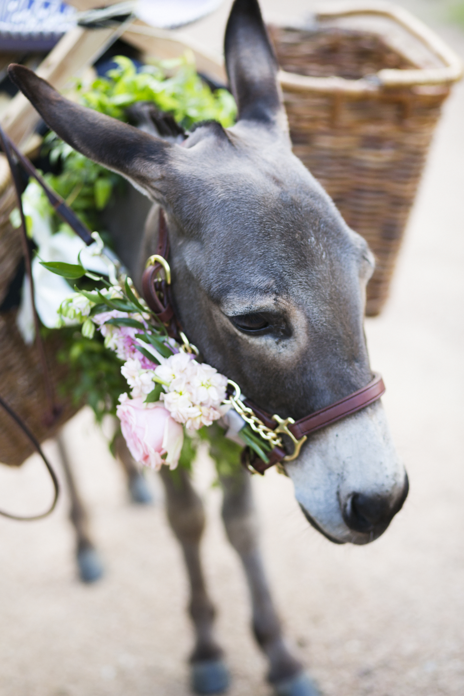 drink-beer-donkeys-at-your-wedding-psr-1